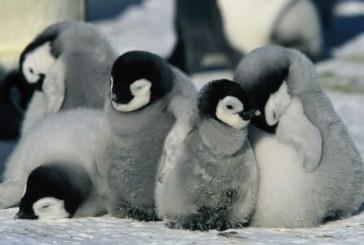 La marcia dei pinguini – Il richiamo