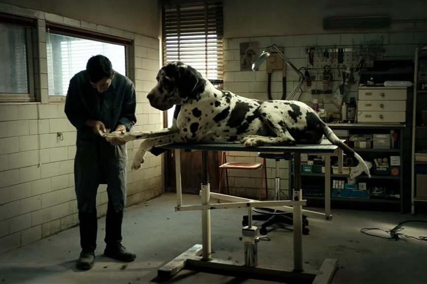 Festival di Cannes 2018: Dogman