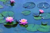 Le Ninfee di Monet – Un incantesimo di acqua e luce (2018)