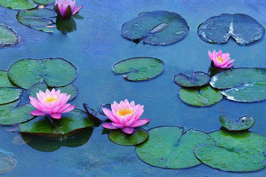 Le Ninfee di Monet - Un incantesimo di acqua e luce (2018)