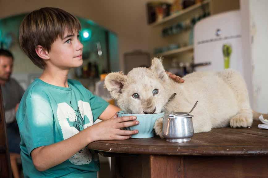 Box office Italia Mia e il leone bianco