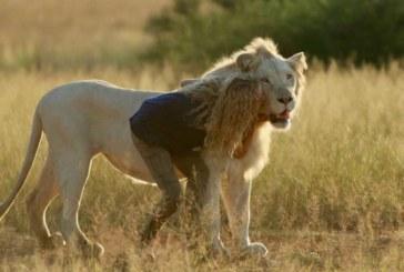 """Box office Italia: stravince """"Mia e il leone bianco"""""""