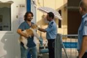 Torna a casa, Jimi!: 10 cose da non fare quando perdi il tuo cane a Cipro (2018)