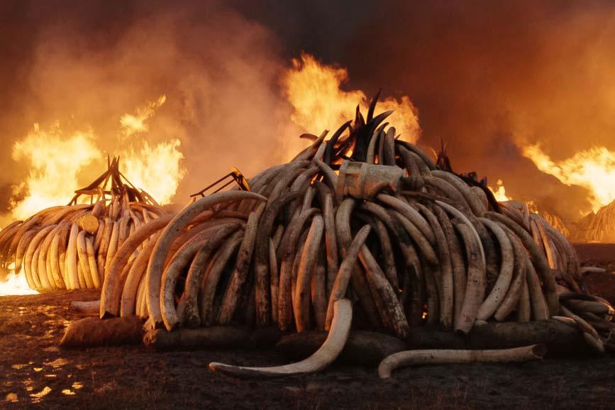 Anthropocene - L'epoca umana documentario