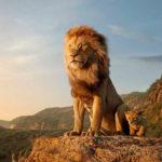 Il Re Leone: conferenza stampa con Marco Mengoni ed Elisa, voci di Simba e Nala