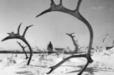 Il bianco pastore di renne (1952)