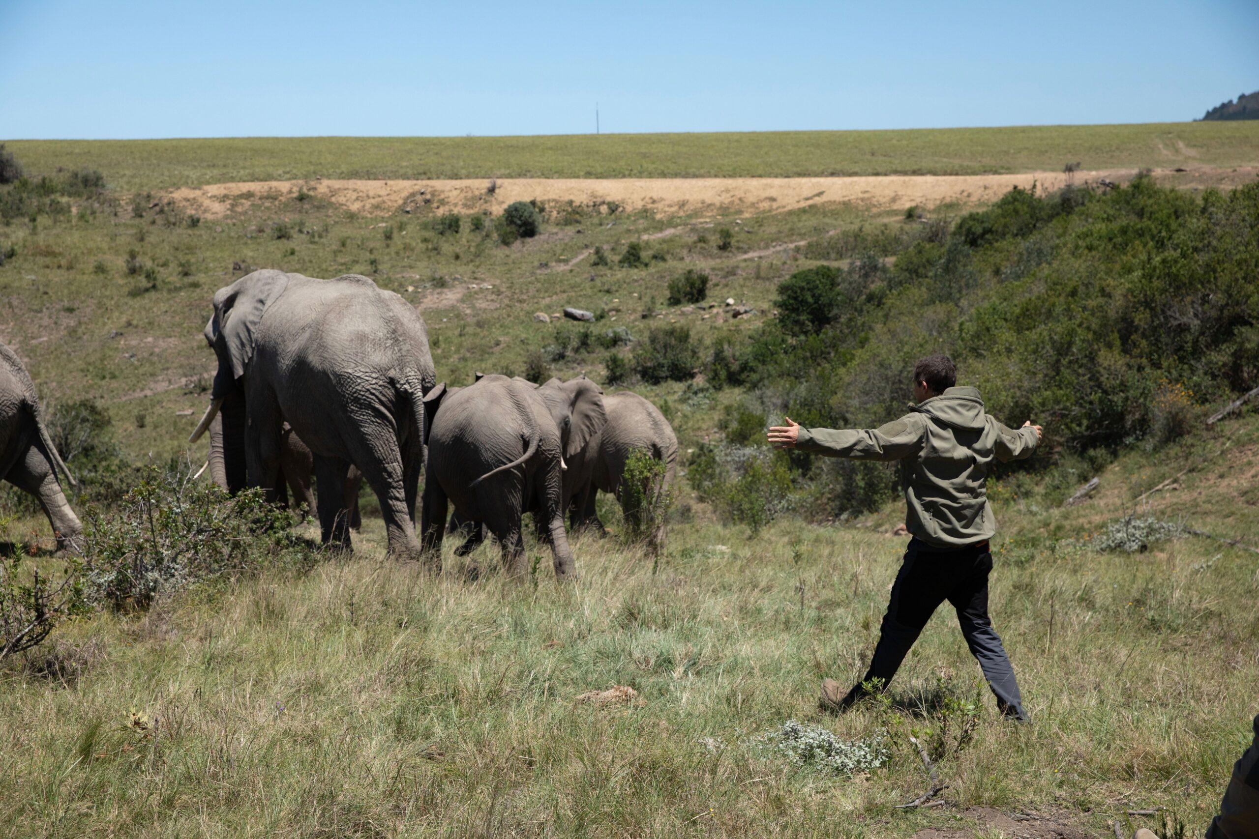 Netflix: annunciato Scuola di Sopravvivenza Missione safari con Bear Grylls