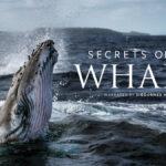 Secret of the Whales: il trailer della docuserie di James Cameron
