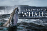 Secret of the Whales: il trailer della docuserie di James Cameron